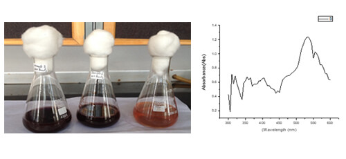 Synthesis And Characterization Of Gold Nanoparticles From Lobelia Nicotianifolia Leaf Extract | IAAM