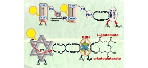 In-situ Prepared 2D Covalent Organic Framework as a Photocatalyst | IAAM